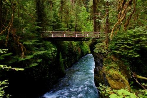 Quinault Rainforest Pony Bridge
