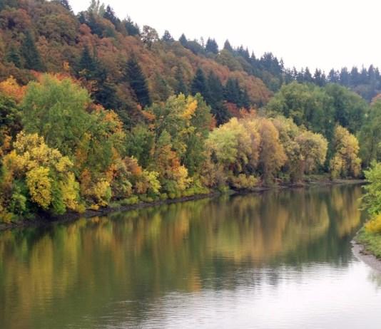 Fall Clark County Ridgefield Wildlife Refuge