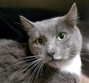 Humane Society of Southwest Washington Featured Pet Amberanna