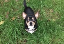 Humane Socity Featured Pet