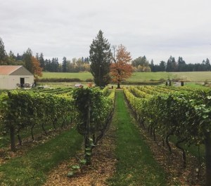 Three Brothers Vineyard and Winery Ridgfield