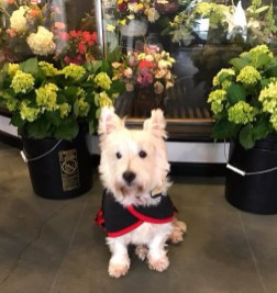 Marty, Luepke's adorable mascot, can be found inside the story and sometimes, among the displays. Photo courtesy: Luepke Flowers & Finds.