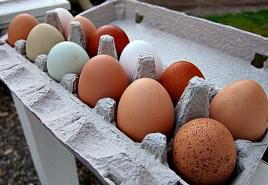 Half Moon Farm Eggs