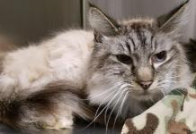 Humane Society for Southwest Washington pet of the week MrMoose