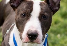 Humane Society for Southwest Washington Ringo Starr