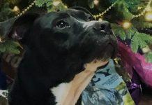 Humane Society for Southwest Washington Pet Food Drive photo