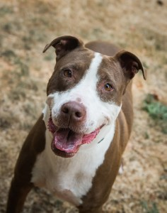 SW Washington Pets of the Week Lolly Pop