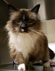 SW Washington Pets of the Week Willow