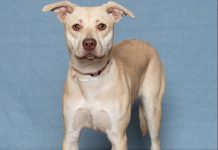Humane Society for Southwest Washington Pets of the Week Arya
