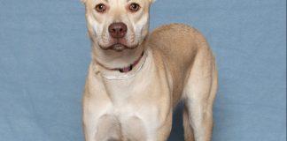 Humane Society for Southwest Washington Pets of the Week Arya