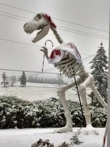 Rex on 179th snow