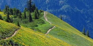 Clark County Trails scenic Dog-Mountain-Trail
