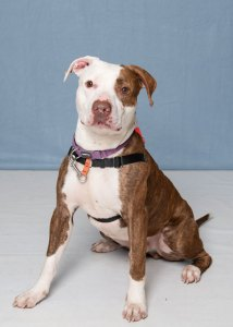 Humane Society for Southwest Washington Reggie