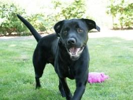 Humane Society for Southwest Washington Pet of the Week Medallion