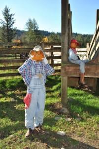 Clark County Pumpkin Patch Pumpkin Lane at Pomeroy Farm
