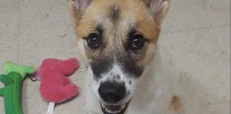 Humane Society for Southwest Washington pet of the week glory