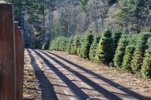 Christmas Tree Farm Clark County Klopman Farms