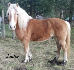 Adopt A Horse Clark County Junior 2