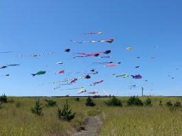 Day Trip grays Harbor kite flying on-beach