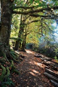 Grays harbor Hiking biking walking trails Quinault-trail