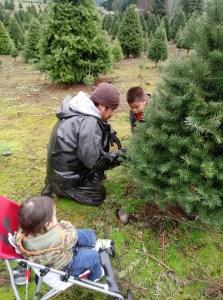 2020 Christmas Tree farms clark county Glenwood