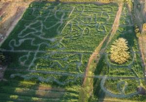 Clark-County-pumpkin-patch-Waltons-Farm