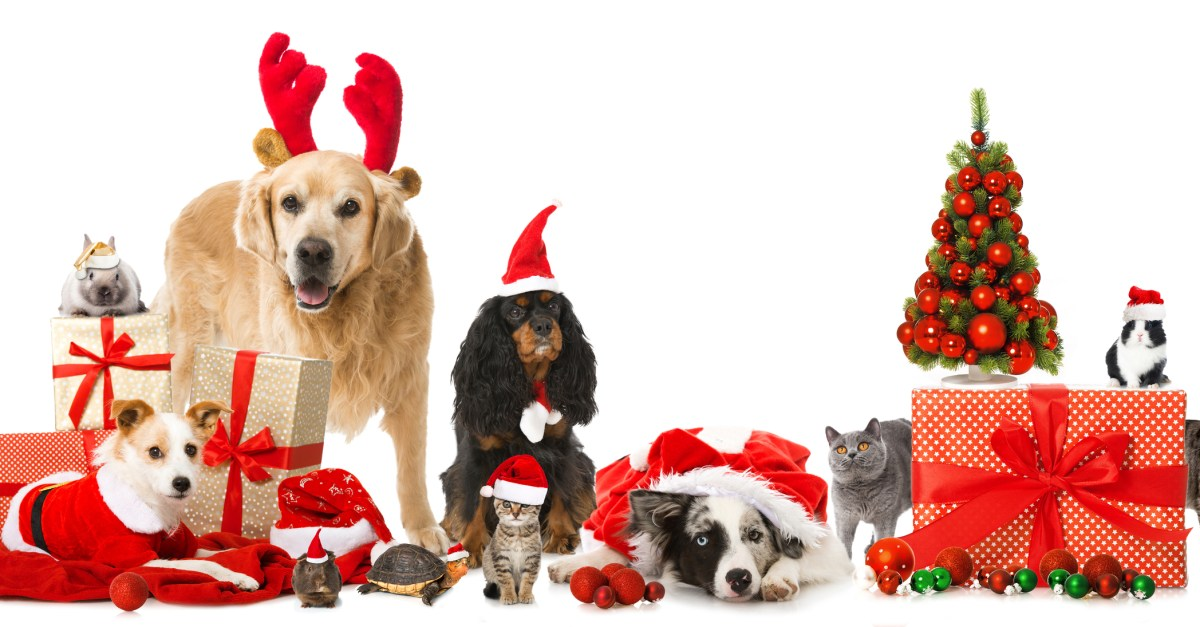 Prime members: Save 40% on your first dog or cat food Subscribe & Save order