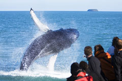 whale-watching-240-160