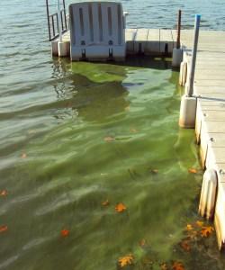 algae-bloom-west-lake-off-dock