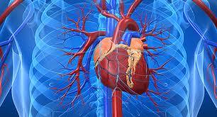 Marina e Iñigo nos explican el Sistema Circulatorio