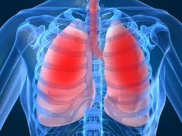Felipe nos explica las partes del Sistema Respiratorio