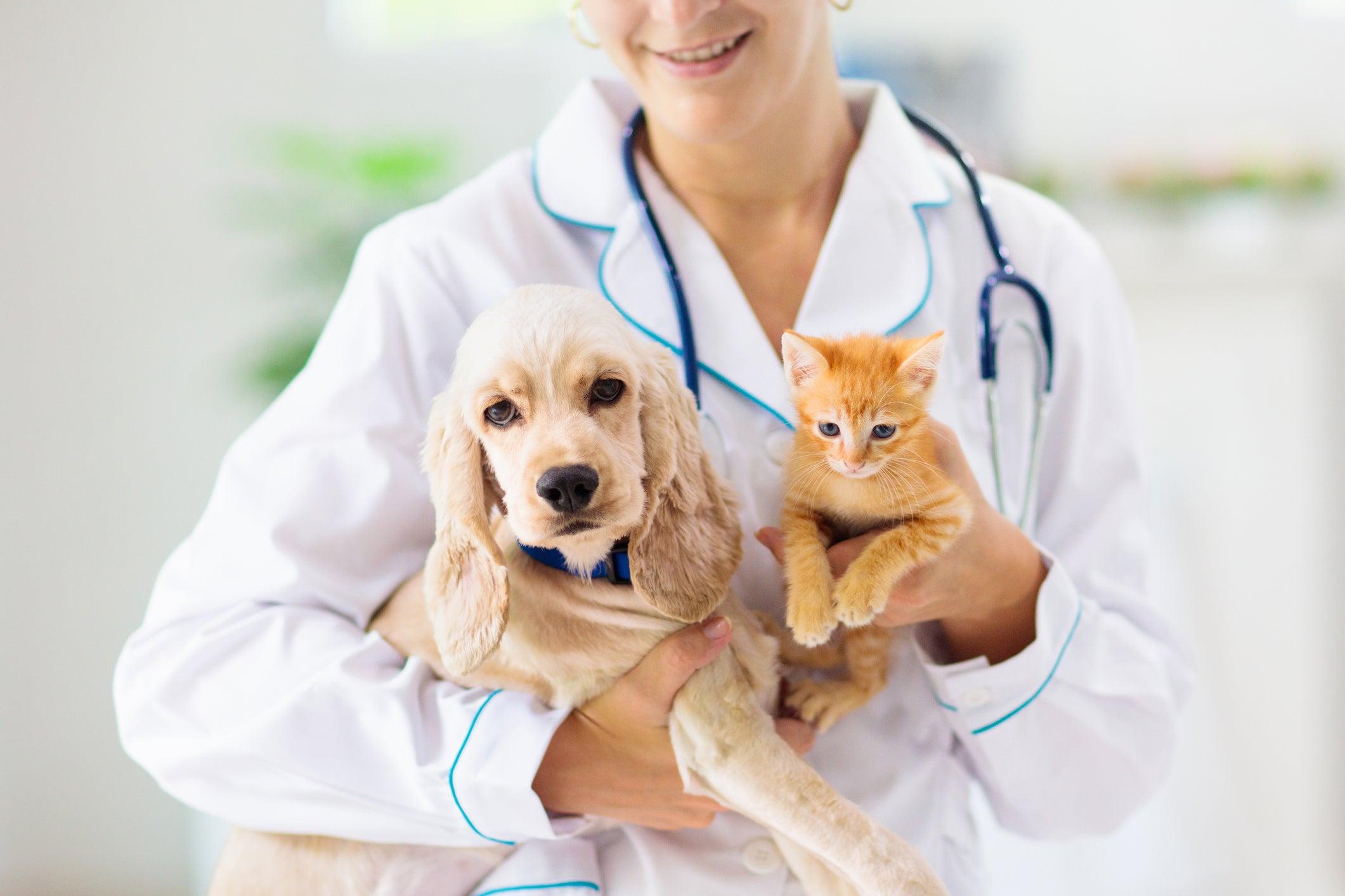 Médico veterinário com filhotes de cão e gato