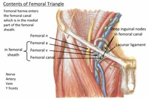 Wandering Thoughts From The Inguinal Ligament… | Classical
