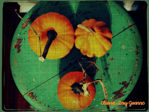 autumn-2016-8