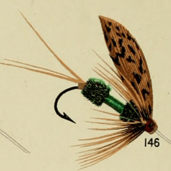 Royal Governor Trout Fly