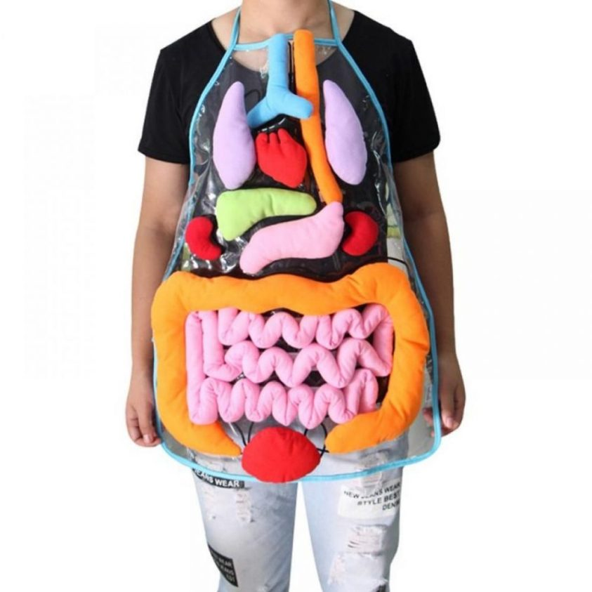 NEW Educational Insights Toys For Children Anatomy Apron ...