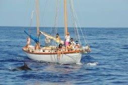 Ilheu dolphin