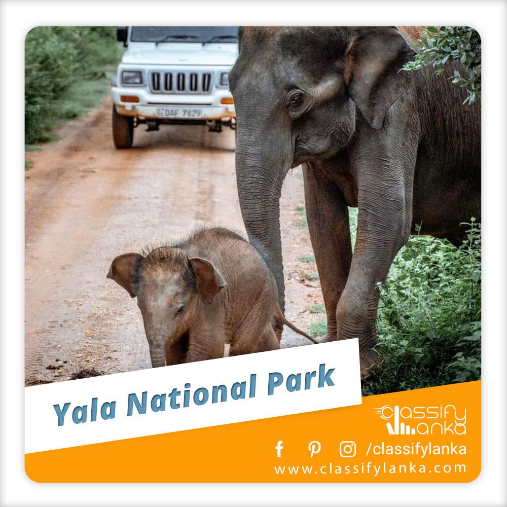 Sri Lanka Yala National Park Safari guide