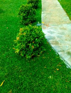 Landscaping and Gardening Service in Kaduwela