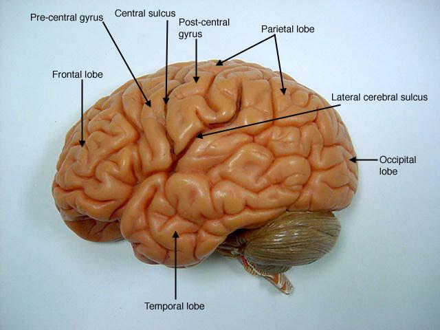 CEO's, learn from neurodegenerative diseases.