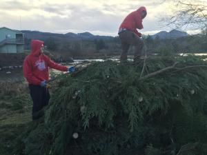 christmas tree recycling