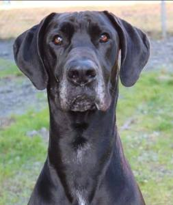 Clatsop County Animal Shelter Pet of the week Nym