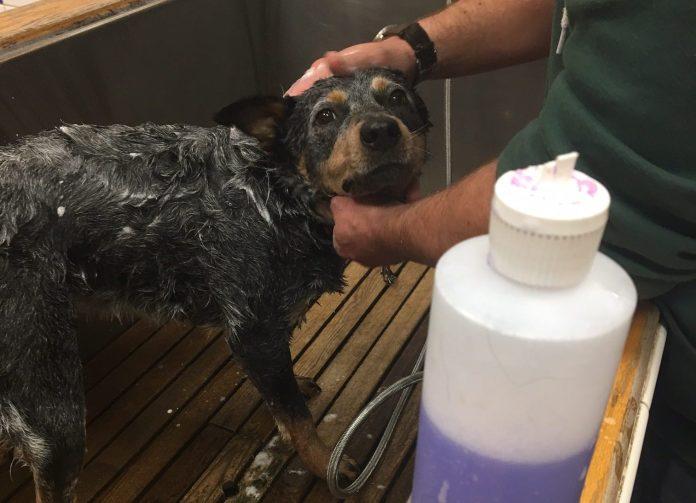 The Pet Works Astoria shampoo choices