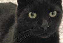 Clatsop County animal shelter pet of the week Gideon
