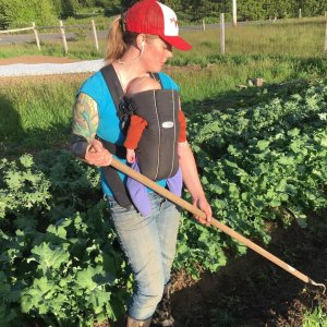 Community Supported Agriculture Clatsop County Spring Up Farm