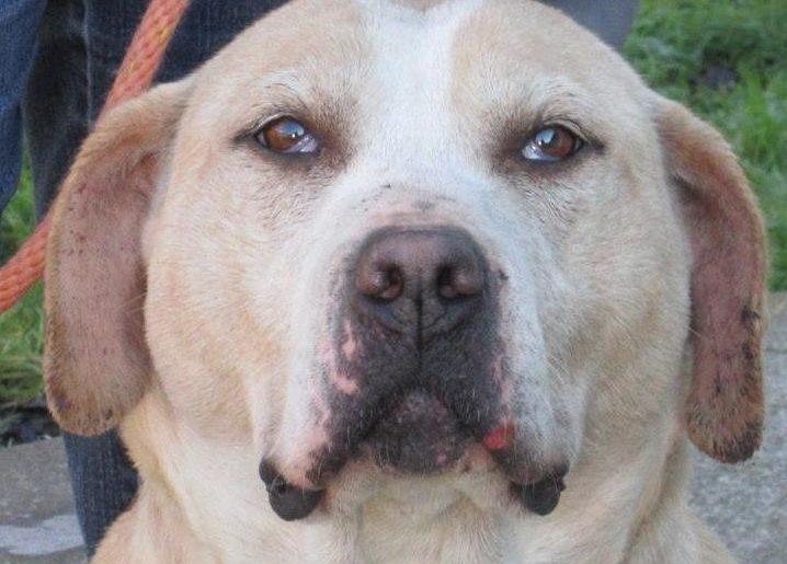 Clatsop County Animal Shelter Pet of the Week Oceana