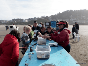 Haystack Rock Awareness Program