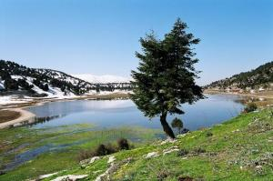 north lebanon