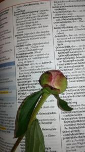 Der Wahn mit dem Gendern: Die deutsche Sprache unterscheidet nur nach dem grammatikalischen und nicht nach dem natürlichem Geschlecht.