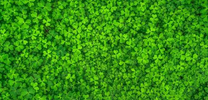 leaf-nature-green-spring-158780.jpeg